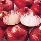 プランターで簡単に作れる健康野菜 赤玉ねぎ 湘南レッド 1ポット