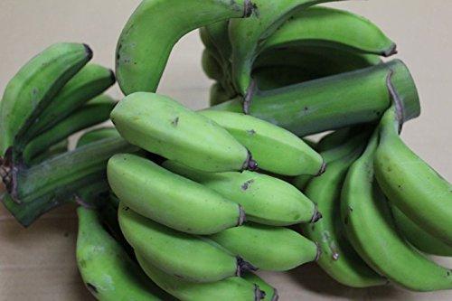 沖縄産 数量限定 幻の島バナナ 約1kg 完熟の一歩手前が食べごろです