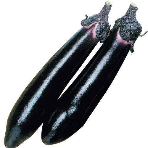 【メール便配送】国華園 種 野菜たね ナス F1黒仙なす 1袋(2ml)【※発送が株式会社 国華園からの場合のみ正規品です】