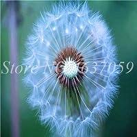 50pcsの種子タンポポMongolicumフラワーアウトドア美しいタンポポハーブ種子DIYの家の庭には、簡単に成長すると用品:6