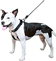 Sporn Sporn Big Dog Halter, Medium Black