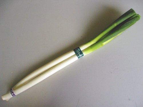 日常の一般野菜 白ねぎ ネギ 1束