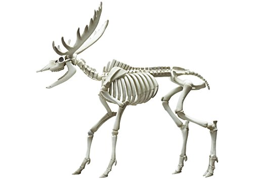 ポーズスケルトン哺乳類 ヘラジカ