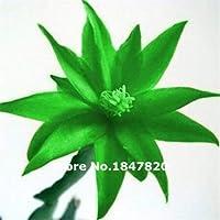 3:100個/ロットSchlumbergera種子、カニサボテン、鉢植え植栽、植栽季節、開花植物