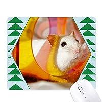 白ラット動物ペットゲームおもちゃ オフィスグリーン松のゴムマウスパッド