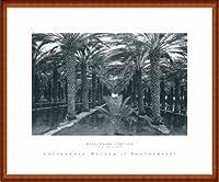 ポスター アンセル アダムス Palm Grove 1966 額装品 ウッドハイグレードフレーム(ナチュラル)