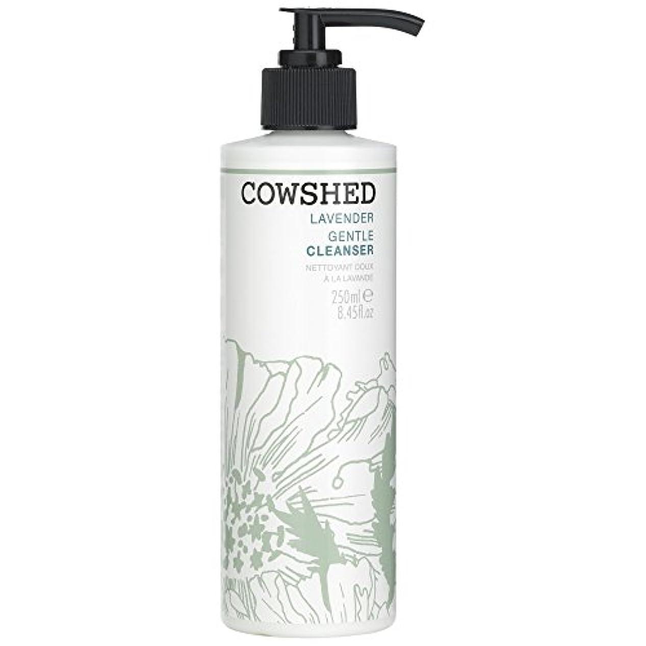 露出度の高い汚れる雑多な牛舎ラベンダージェントルクレンザー、250ミリリットル (Cowshed) (x2) - Cowshed Lavender Gentle Cleanser, 250ml (Pack of 2) [並行輸入品]