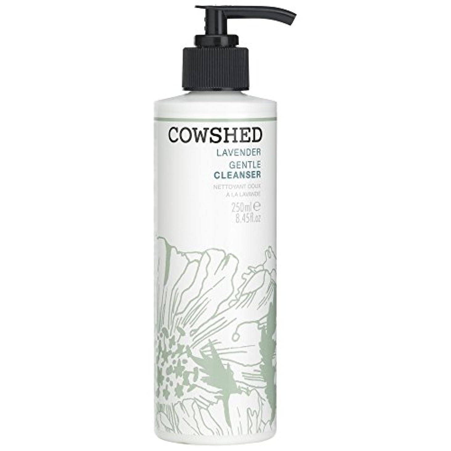 お手伝いさんもつれ引っ張る牛舎ラベンダージェントルクレンザー、250ミリリットル (Cowshed) (x6) - Cowshed Lavender Gentle Cleanser, 250ml (Pack of 6) [並行輸入品]