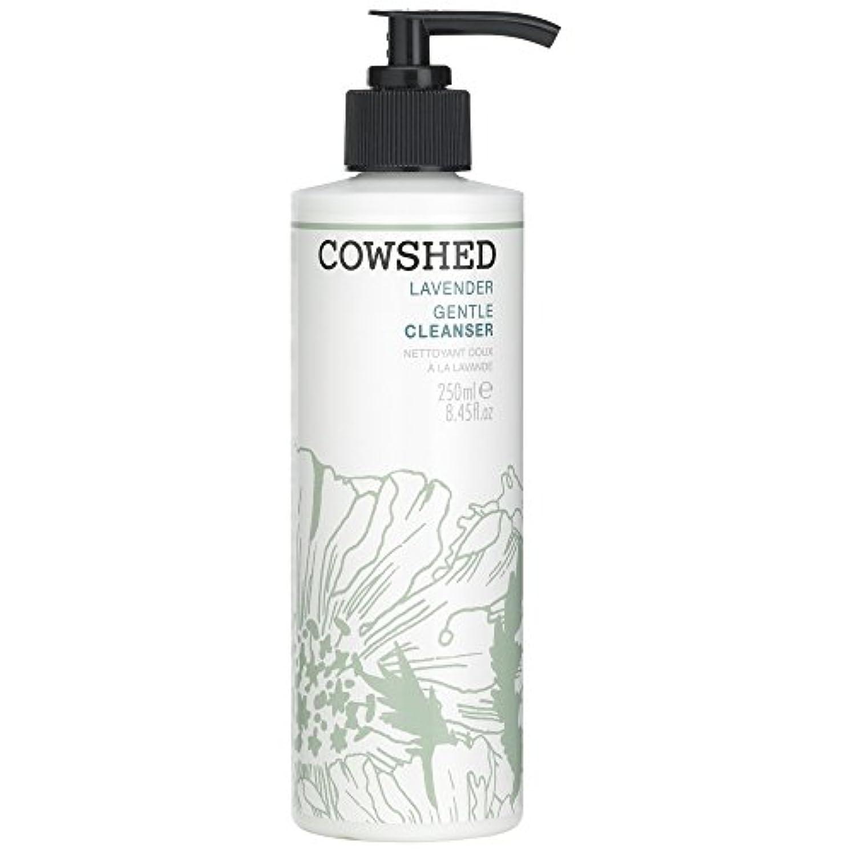 踏みつけ感情知恵牛舎ラベンダージェントルクレンザー、250ミリリットル (Cowshed) (x6) - Cowshed Lavender Gentle Cleanser, 250ml (Pack of 6) [並行輸入品]