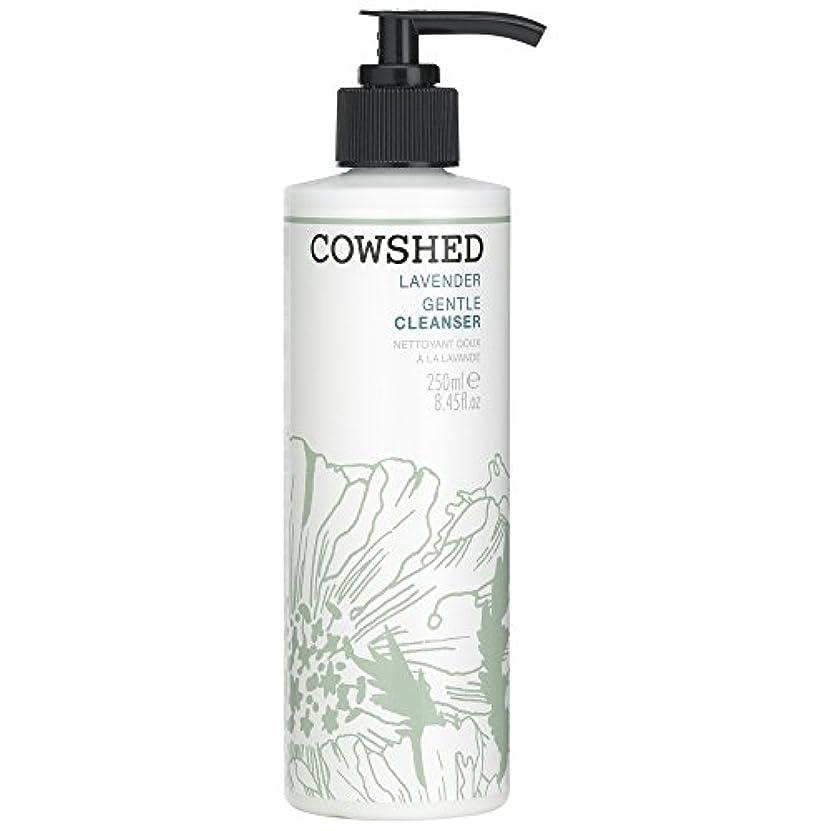 人気の適応手綱牛舎ラベンダージェントルクレンザー、250ミリリットル (Cowshed) (x2) - Cowshed Lavender Gentle Cleanser, 250ml (Pack of 2) [並行輸入品]