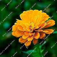 4:100個をZLKING /装飾さジニアエレガンスの盆栽種子を詰める庭高い品種の種子は香りを持っている4