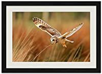 フクロウ鳥フライト動物の写真木製黒額縁アートポスター(40cmx60cm)
