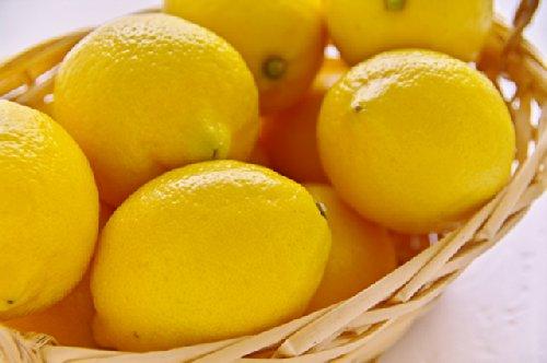 無農薬 訳あり 国産 樹成り レモン 10kg 熊本産 産地直送