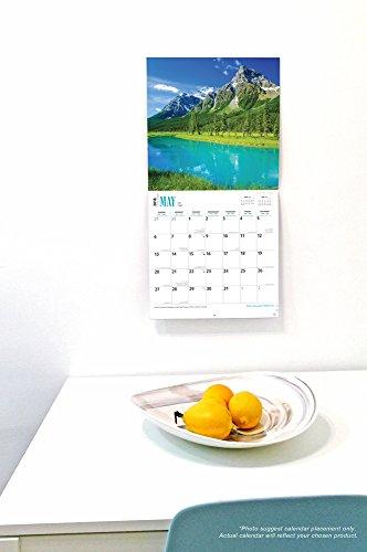 Chow Chows 2018 Calendar