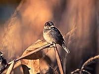 芸術はポスターを印刷します - スズメ鳥カップルブランチ - キャンバスの 写真 ポスター 印刷 (80cmx60cm)