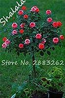 10個/袋は種子が種子盆栽種子シード種子は14色がホームガーデン12のために恋人の種を与えるバラバラ