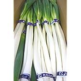 鳥取県産 白ねぎ 1箱3kg