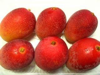 宮崎産完熟ミニマンゴー 赤秀5~8玉 およそ470g パック入り。