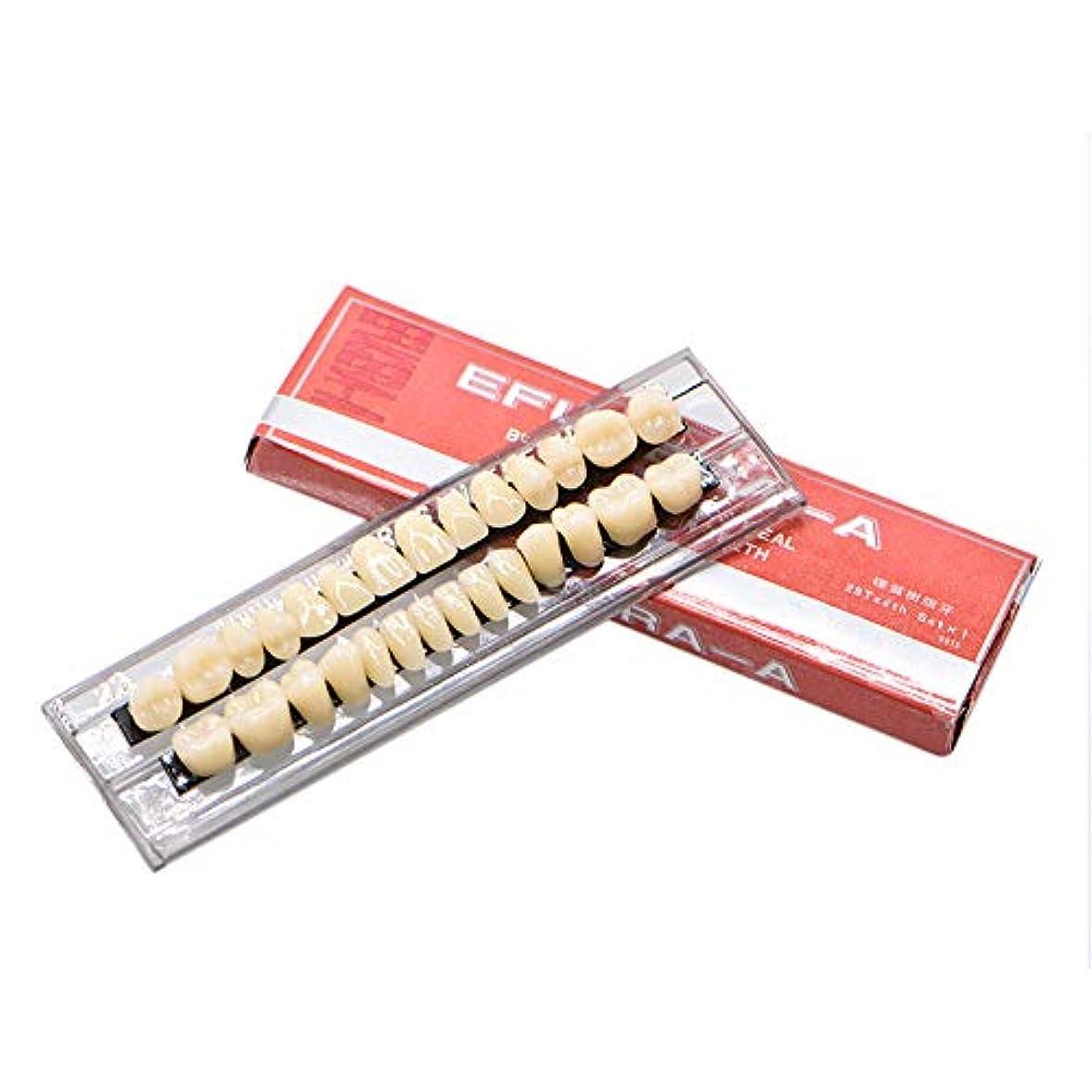 万一に備えて火薬契約したOral Dentistry 入れ歯ケア 口腔歯科 歯科用アクリル 樹脂 義歯キット ハロウィンホラーの小道具 ホワイト義歯23 A3 アップ&ダウン歯科28個/セット(A3*2)