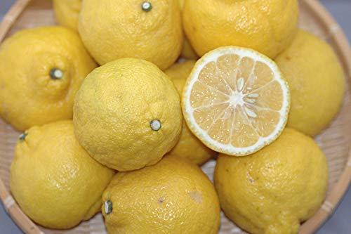 愛媛県産 はるか 約3kgお試し品 減農薬・有機肥料栽培 贈答用品質 みかん・柑橘類