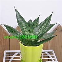 Sansevieria種子、安いSansevieria種子、盆栽バルコニー、Sansevieria鉢植えの種子 - 100個/袋:ブラック