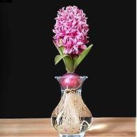 2:輸入球根、1個/ lot Hyacinth 'Mix' Hyacinthus Hardy Bulb美しい盆栽植物DIYホームガーデン2個送料無料
