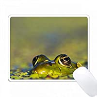 食用カエル - ルーマニア、ドナウ川デルタ。 PC Mouse Pad パソコン マウスパッド