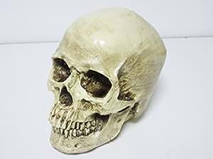 リアルなドクロ・頭蓋骨模型 頭部模型 非可動式