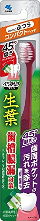 補償カードトチの実の木生葉45°磨きブラシ コンパクト ふつう 1本 × 96個セット