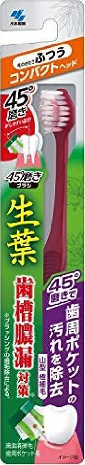 絡まる箱髄生葉45°磨きブラシ コンパクト ふつう 1本 × 10個セット