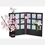 【お花見】桜格子スタンド 2個/ お楽しみグッズ(紙風船)付きセット