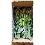 『安納芋』苗 50本 さつまいも苗 人気の品種 宮崎県産