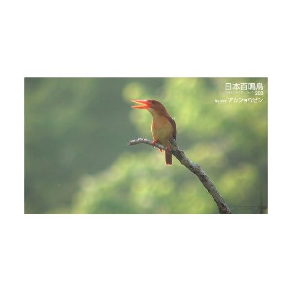 シンフォレストBlu-ray 日本百鳴鳥 20...の紹介画像2