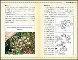 毒草・薬草事典 命にかかわる毒草から和漢・西洋薬、園芸植物として使われているものまで (サイエンス・アイ新書) 画像