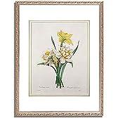 ピエール=ジョゼフ・ルドゥーテ Redoute Pierre Joseph「Narcissus gouani (double daffodil), engraved by Bessin, from 'Choix des Plus Belles Fleurs', 1827 (coloured engraving) 」インテリア アート 絵画 プリント 額装作品 フレーム:装飾(銀) サイズ:M (306mm X 397mm)