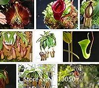 PLATのFIRM:シードシードシード小説の蚊の品種を食べて100種/安い盆栽ウツボカズラ種子