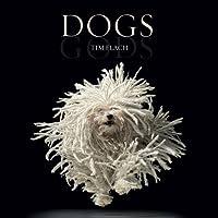 Dogs / Gods