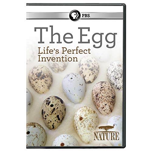 Nature: The Egg: Life's Perfect Invention [DVD]