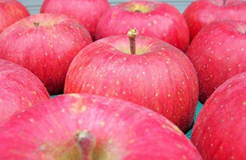 長野県産 生産農家直送りんご サンふじ上級ランク(特秀) 贈答向き 9〜18玉 約5kg入り/箱