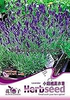 種子パッケージ ラベンダーの種子20枚盆栽種子花の種子の種子オリジナル梱包ポットプラント