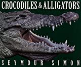 Crocodiles & Alligators 画像