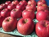 長野県産りんご「サンふじ」 特秀5Kg 小玉食べきりサイズ