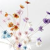 【Blooming&me】上質の国内産 フラワーデザイナー推薦 スターフラワーブロッサム 40本入+他種類のドライフラワーをおまけで2本! ハーバリウムに大人気「選べるカラー全6色」(ハーバリウム キャンドル クリスマス 木の実 ドライフラワー) スターフラワー全6色セット