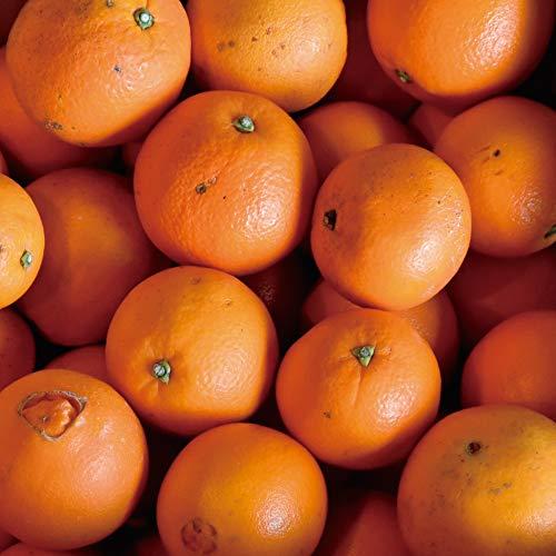 伊藤農園 オレンジ ネーブル 小玉 中玉 大玉 ミックス 2Sサイズ〜3Lサイズ 箱詰め 送料無料(訳あり10�s)