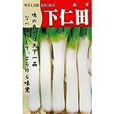 ネギ 種 【 下仁田 】 種子 小袋(約8ml)