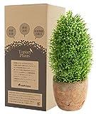 フェイクグリーン 光触媒 トピアリー オーバル お世話のいらない 癒しの グリーン 観葉植物 インテリア 人工観葉植物