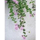紫の花の絵葉書 小葉のランタナ (ポストカード、ハイグレードタイプ、宛名面には郵便番号枠が印刷済み、内容量100枚)