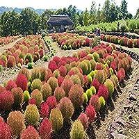 種子パッケージ: ビッグセール 500枚種子盆栽DIY家庭菜園の種