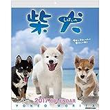 アクティブコーポレーション 2017年 犬 柴犬 カレンダー 壁掛け 森田米雄 ACL-11