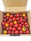 ミニトマト 1kg詰め合わせ 熊本県産